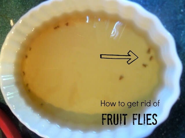 How To Get Rid Of Fruit Flies  Miss Information. Layout For Living Room. Designs For Living Rooms. Kelly Hoppen Living Rooms. Luxury Living Room Interior Design. Victorian Living Room Design. Burgundy Living Room Color Schemes. Cozy Decorating Ideas For Living Rooms. Paint Samples Living Room