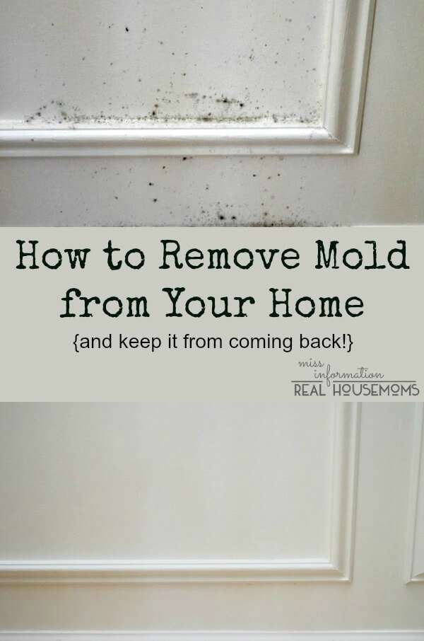 How to get mould off bathroom ceiling what kills black mold new 58 best how to kill black mold for How to get mold off of walls in bathroom