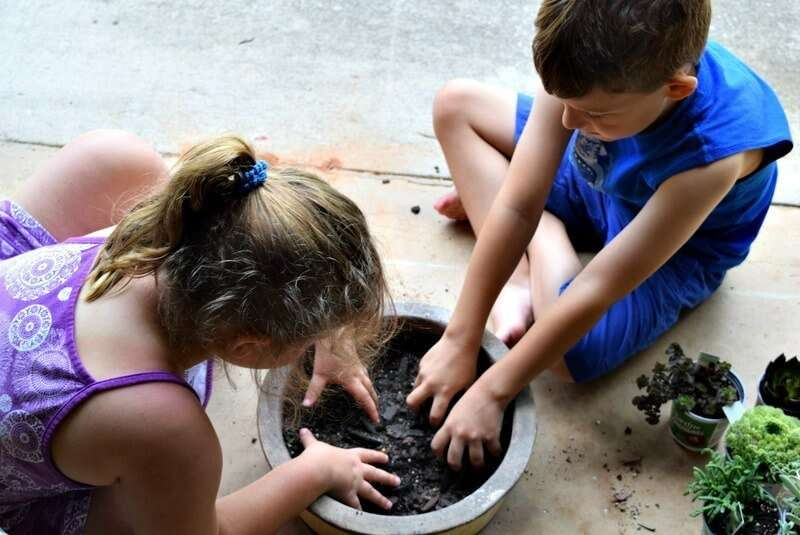 Make a succulent garden with your kids