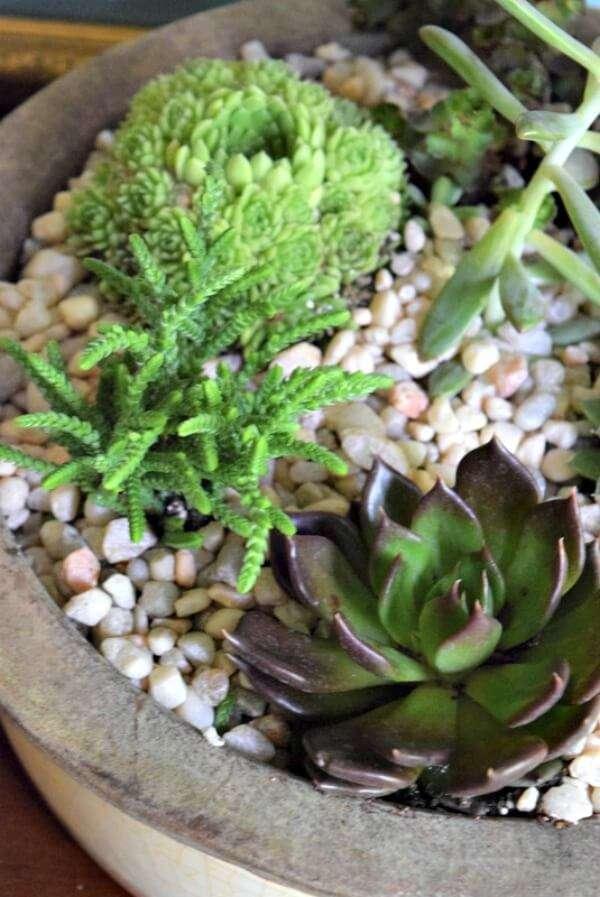 DIY Succulent Garden Miss Information