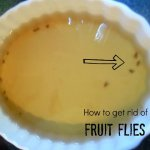 How to get rid of fruit flies using 2 household ingredients